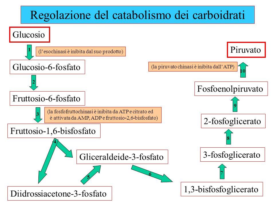 Regolazione del catabolismo dei carboidrati Glucosio Glucosio-6-fosfato Fruttosio-6-fosfato Fruttosio-1,6-bisfosfato Gliceraldeide-3-fosfato Diidrossiacetone-3-fosfato 1,3-bisfosfoglicerato 3-fosfoglicerato 2-fosfoglicerato Fosfoenolpiruvato Piruvato (l'esochinasi è inibita dal suo prodotto) (la fosfofruttochinasi è inibita da ATP e citrato ed è attivata da AMP, ADP e fruttosio-2,6-bisfosfato) (la piruvato chinasi è inibita dall'ATP) 1 2 3 4 5 6 7 8 9 10