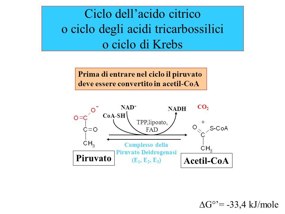 Ciclo dell'acido citrico o ciclo degli acidi tricarbossilici o ciclo di Krebs Prima di entrare nel ciclo il piruvato deve essere convertito in acetil-CoA Complesso della Piruvato Deidrogenasi (E 1, E 2, E 3 ) NAD + NADH Piruvato CoA-SH TPP,lipoato, FAD CO 2 + Acetil-CoA  G°'= -33,4 kJ/mole