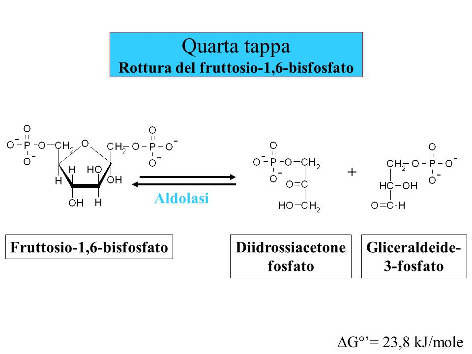 Quarta tappa Rottura del fruttosio-1,6-bisfosfato Aldolasi Fruttosio-1,6-bisfosfato  G°'= 23,8 kJ/mole Diidrossiacetone fosfato Gliceraldeide- 3-fosf