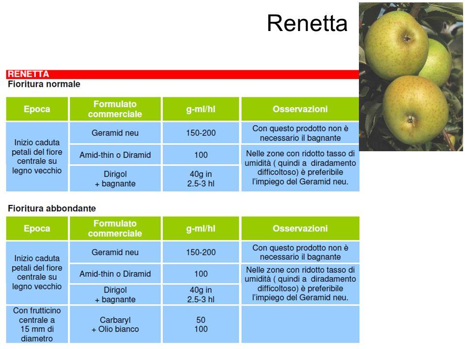 Renetta