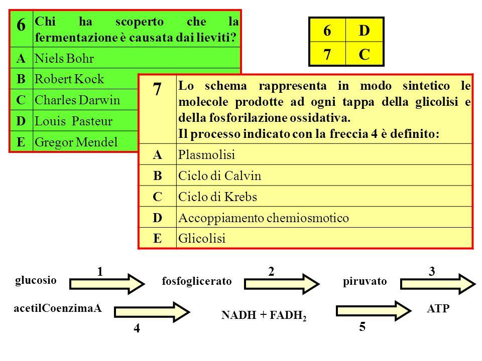 NADH + FADH 2 glucosio 1 piruvato 3 fosfoglicerato 2 acetilCoenzimaA 4 ATP 5 6 Chi ha scoperto che la fermentazione è causata dai lieviti? ANiels Bohr