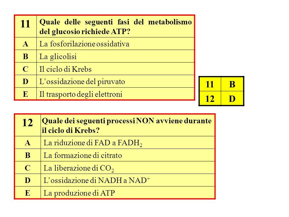 11 Quale delle seguenti fasi del metabolismo del glucosio richiede ATP? ALa fosforilazione ossidativa BLa glicolisi CIl ciclo di Krebs DL'ossidazione