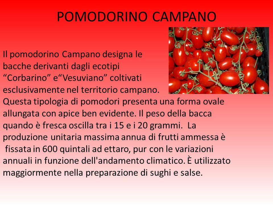 POMODORINO CAMPANO Il pomodorino Campano designa le bacche derivanti dagli ecotipi Corbarino e Vesuviano coltivati esclusivamente nel territorio campano.