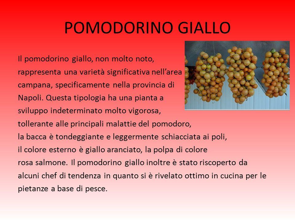 POMODORINO GIALLO Il pomodorino giallo, non molto noto, rappresenta una varietà significativa nell'area campana, specificamente nella provincia di Napoli.
