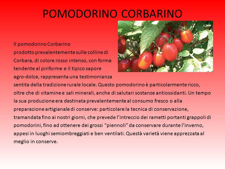 POMODORINO CORBARINO Il pomodorino Corbarino prodotto prevalentemente sulle colline di Corbara, di colore rosso intenso, con forma tendente al piriforme e il tipico sapore agro-dolce, rappresenta una testimonianza sentita della tradizione rurale locale.