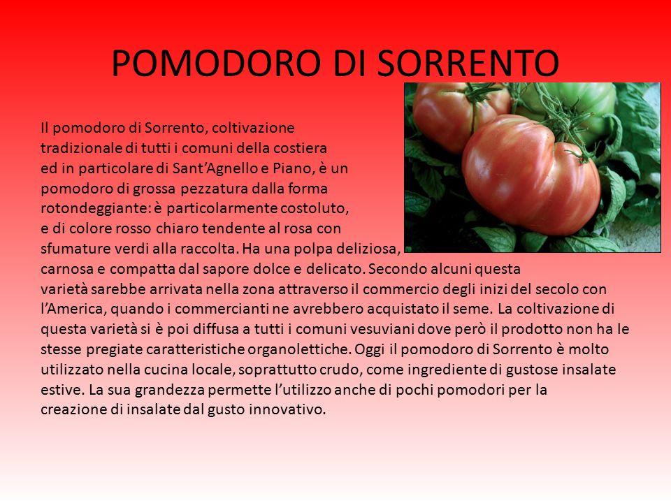 POMODORINO CORBARINO Il pomodorino Corbarino prodotto prevalentemente sulle colline di Corbara, di colore rosso intenso, con forma tendente al pirifor