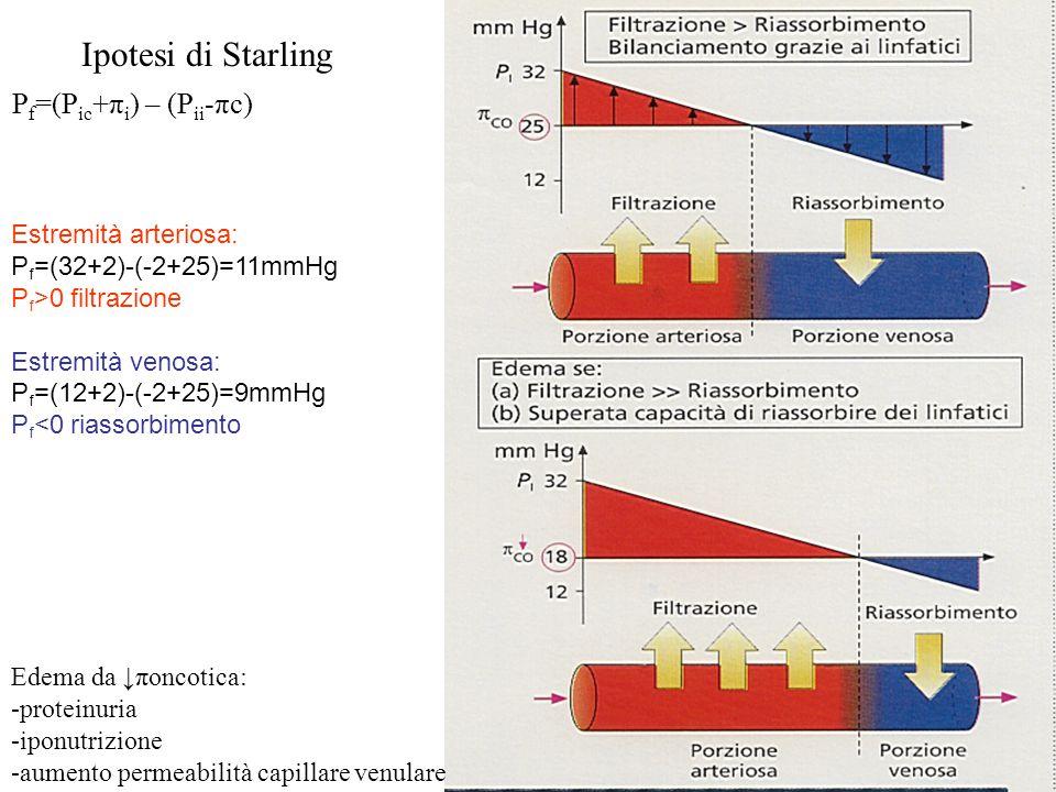 Ipotesi di Starling Edema da ↓πoncotica: -proteinuria -iponutrizione -aumento permeabilità capillare venulare Estremità arteriosa: P f =(32+2)-(-2+25)