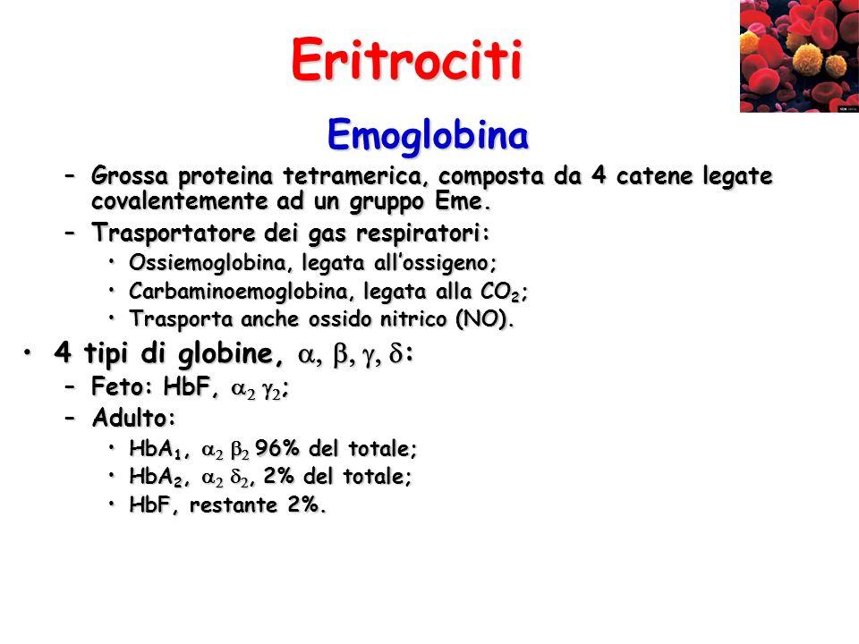 Eritrociti Emoglobina –Grossa proteina tetramerica, composta da 4 catene legate covalentemente ad un gruppo Eme. –Trasportatore dei gas respiratori: O