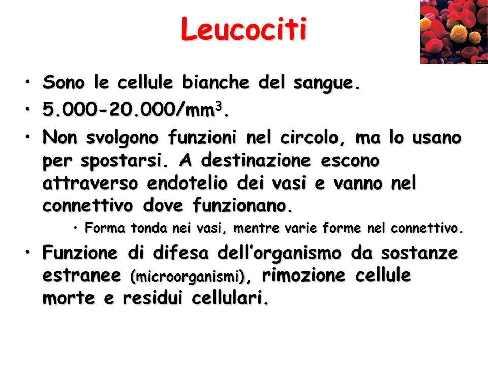 Leucociti Sono le cellule bianche del sangue.Sono le cellule bianche del sangue. 5.000-20.000/mm 3.5.000-20.000/mm 3. Non svolgono funzioni nel circol