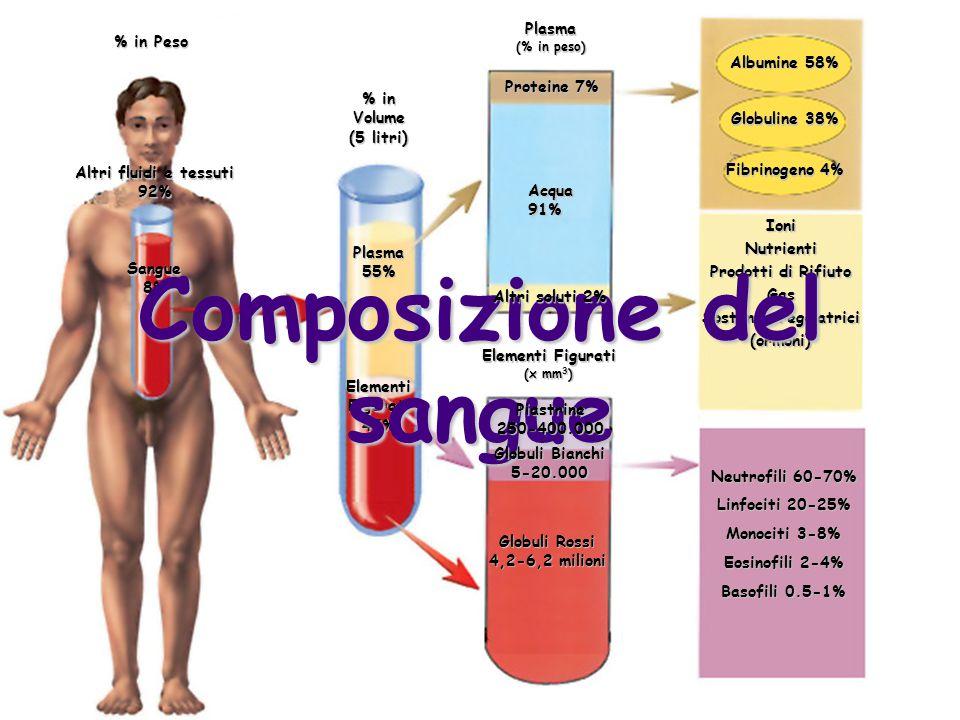 Altri fluidi e tessuti 92%Sangue8% % in Volume (5 litri) Plasma55% Elementi Figurati 45% Plasma (% in peso) Albumine 58% Globuline 38% Fibrinogeno 4%