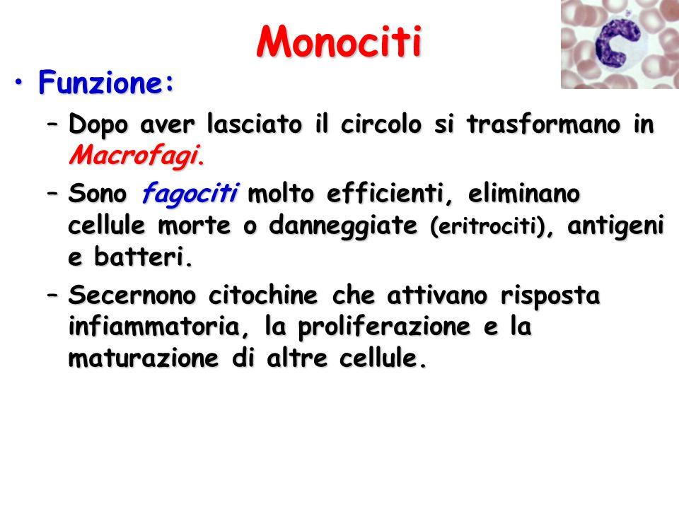 Monociti Funzione:Funzione: –Dopo aver lasciato il circolo si trasformano in Macrofagi. –Sono fagociti molto efficienti, eliminano cellule morte o dan