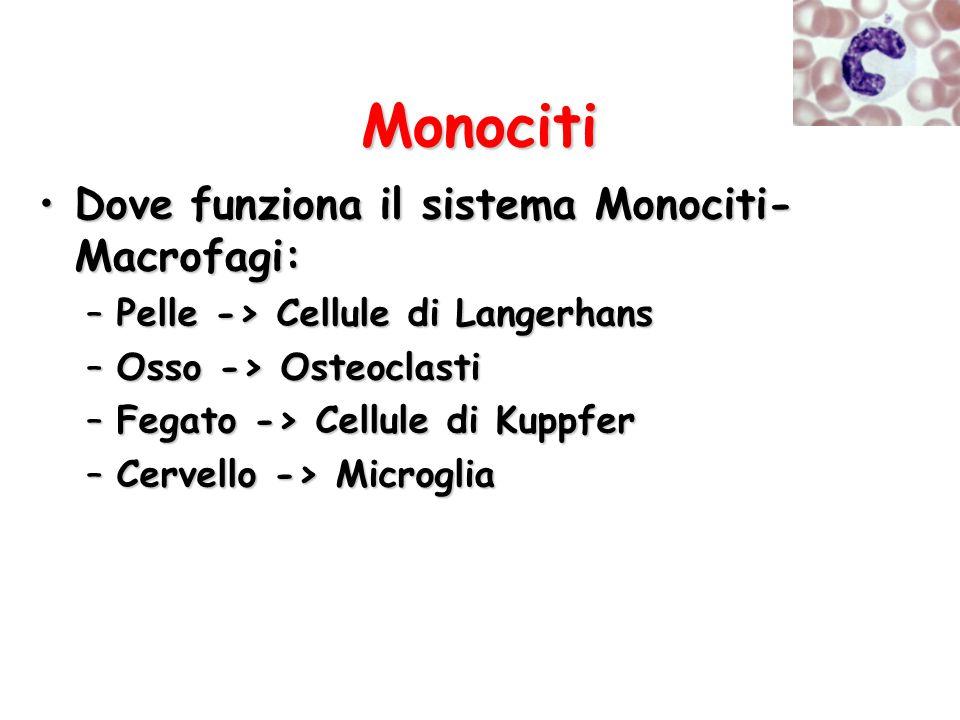 Monociti Dove funziona il sistema Monociti- Macrofagi:Dove funziona il sistema Monociti- Macrofagi: –Pelle -> Cellule di Langerhans –Osso -> Osteoclas