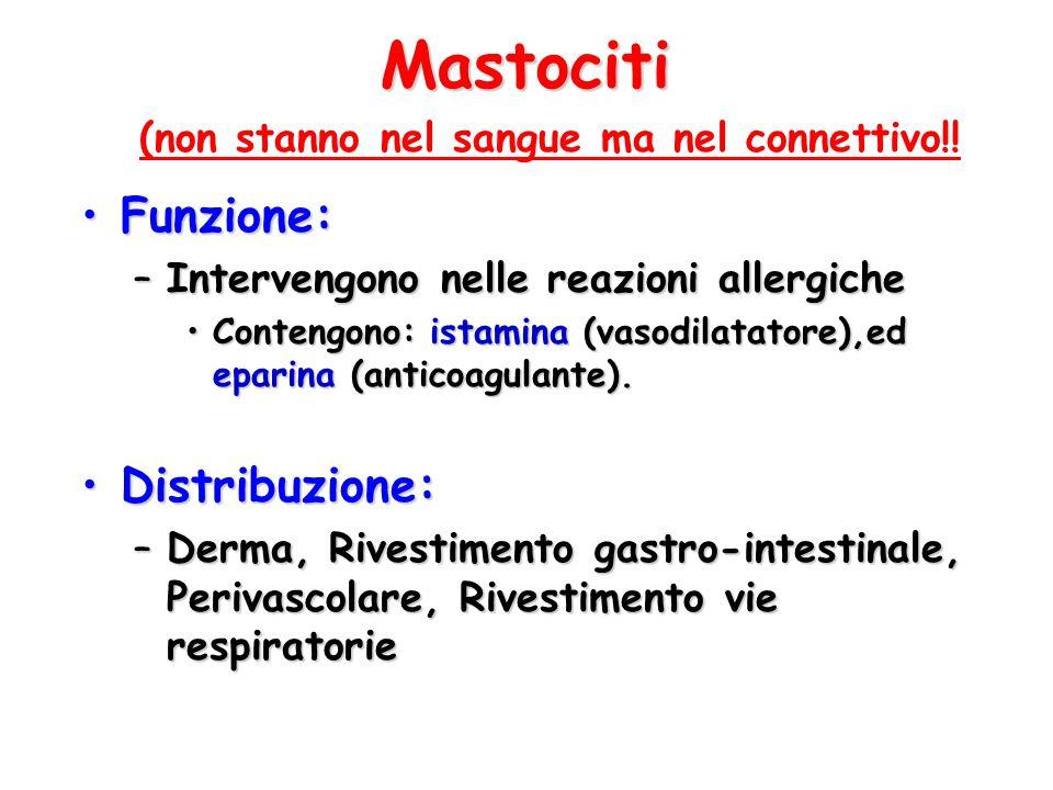 Mastociti Funzione:Funzione: –Intervengono nelle reazioni allergiche Contengono: istamina (vasodilatatore),ed eparina (anticoagulante).Contengono: ist