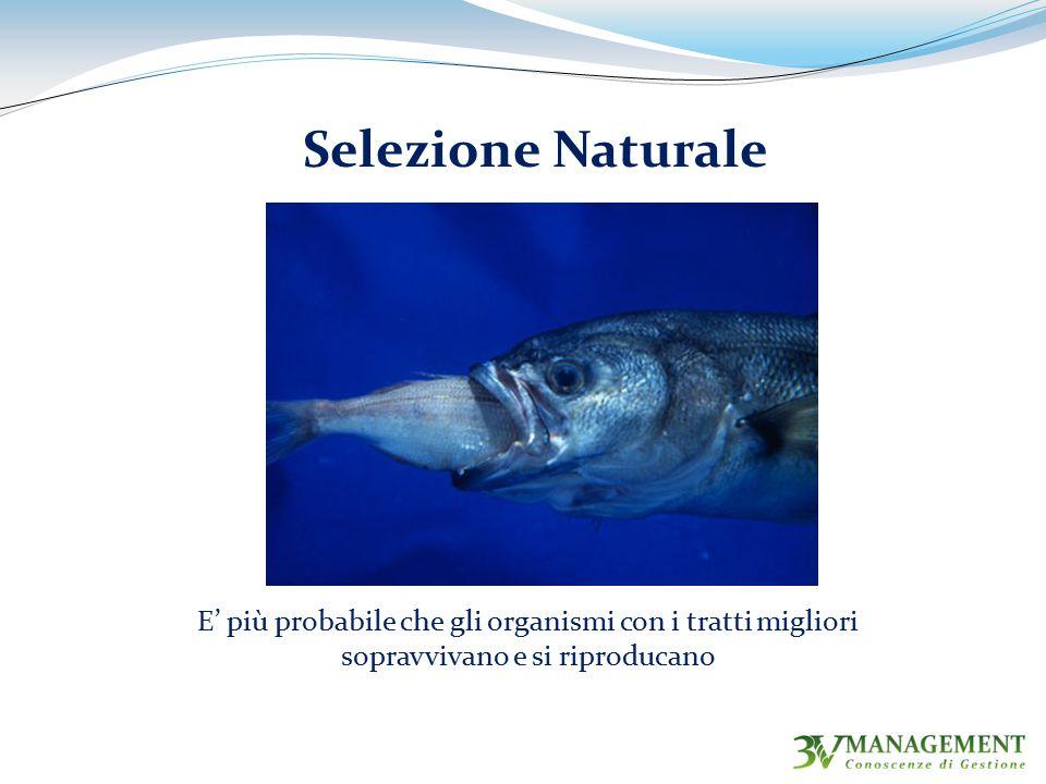 E' più probabile che gli organismi con i tratti migliori sopravvivano e si riproducano Selezione Naturale