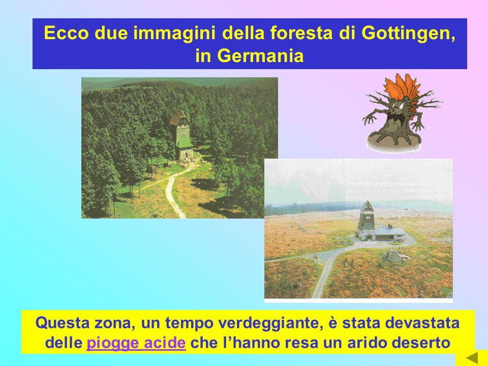 1973 1985 Ecco due immagini della foresta di Gottingen, in Germania Questa zona, un tempo verdeggiante, è stata devastata delle piogge acide che l'han