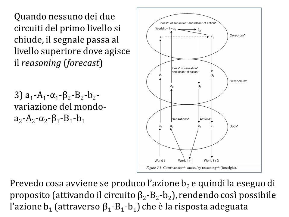 Quando nessuno dei due circuiti del primo livello si chiude, il segnale passa al livello superiore dove agisce il reasoning (forecast) 3) a 1 -A 1 -α 1 -β 2 -B 2 -b 2 - variazione del mondo- a 2 -A 2 -α 2 -β 1 -B 1 -b 1 Prevedo cosa avviene se produco l'azione b 2 e quindi la eseguo di proposito (attivando il circuito β 2 -B 2 -b 2 ), rendendo così possibile l'azione b 1 (attraverso β 1 -B 1 -b 1 ) che è la risposta adeguata