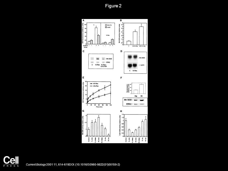 Figure 3 Current Biology 2001 11, 614-619DOI: (10.1016/S0960-9822(01)00159-2)