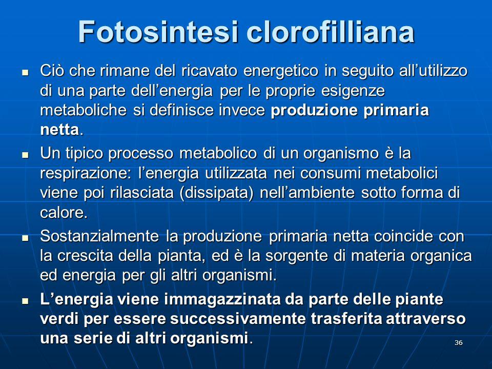 36 Fotosintesi clorofilliana Ciò che rimane del ricavato energetico in seguito all'utilizzo di una parte dell'energia per le proprie esigenze metaboli