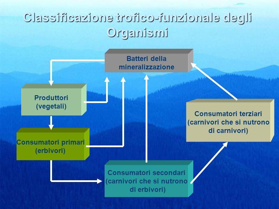 38 Classificazione trofico-funzionale degli Organismi Batteri della mineralizzazione Produttori (vegetali) Consumatori primari (erbivori) Consumatori