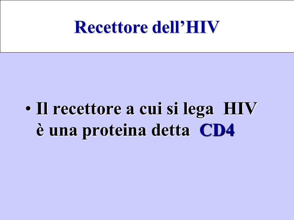Il recettore a cui si lega HIV è una proteina dettaCD4Il recettore a cui si lega HIV è una proteina detta CD4 Recettore dell'HIV
