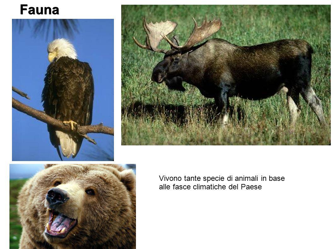 Fauna Vivono tante specie di animali in base alle fasce climatiche del Paese