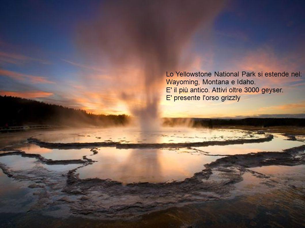Lo Yellowstone National Park si estende nel: Wayoming, Montana e Idaho. E' il più antico. Attivi oltre 3000 geyser. E' presente l'orso grizzly