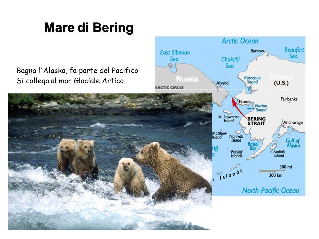 Mare di Bering Bagna l'Alaska, fa parte del Pacifico Si collega al mar Glaciale Artico