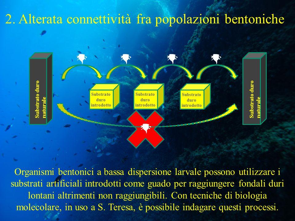 2. Alterata connettività fra popolazioni bentoniche Organismi bentonici a bassa dispersione larvale possono utilizzare i substrati artificiali introdo