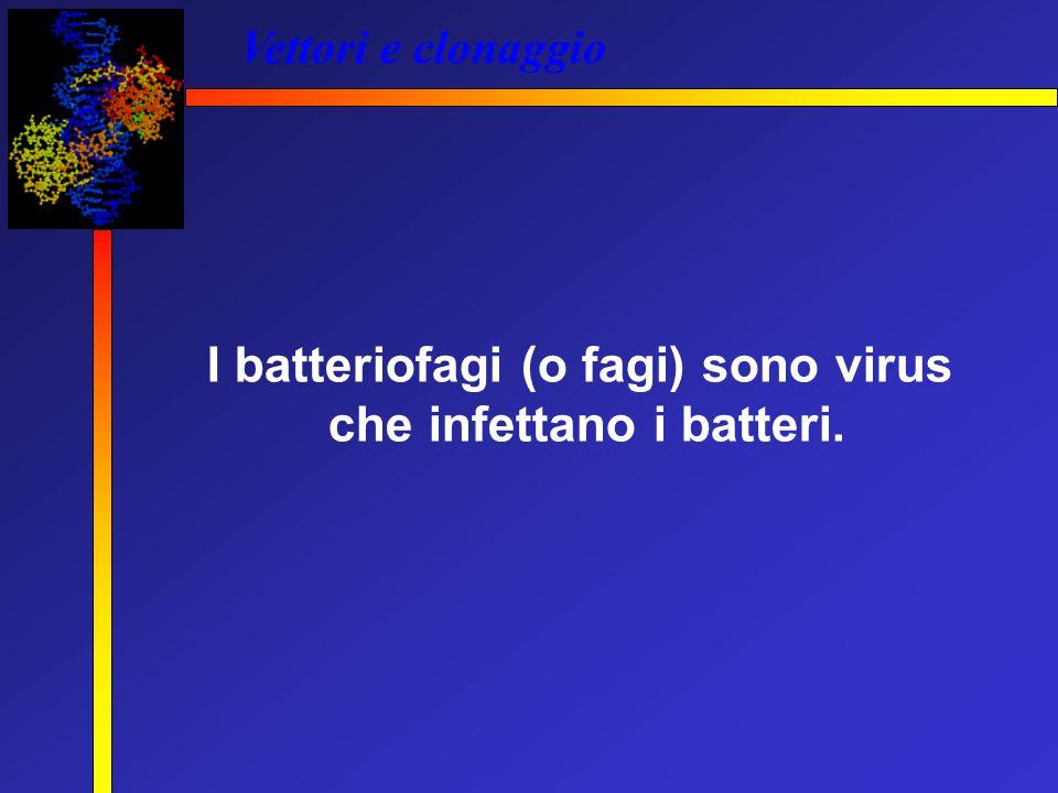 Vettori e clonaggio I batteriofagi (o fagi) sono virus che infettano i batteri.