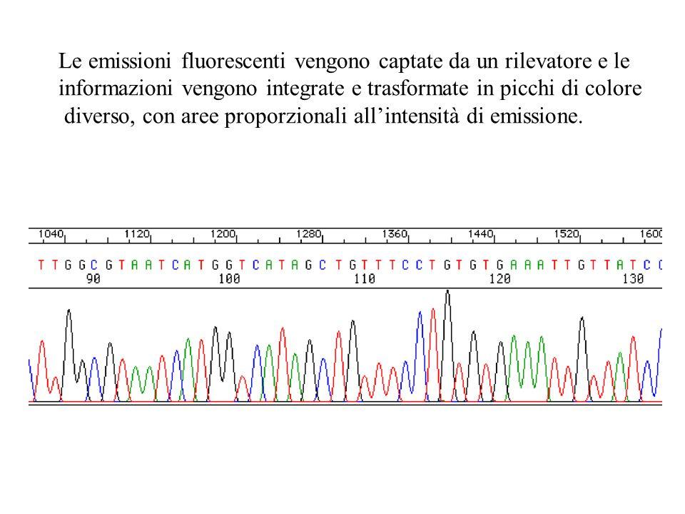 Le emissioni fluorescenti vengono captate da un rilevatore e le informazioni vengono integrate e trasformate in picchi di colore diverso, con aree pro