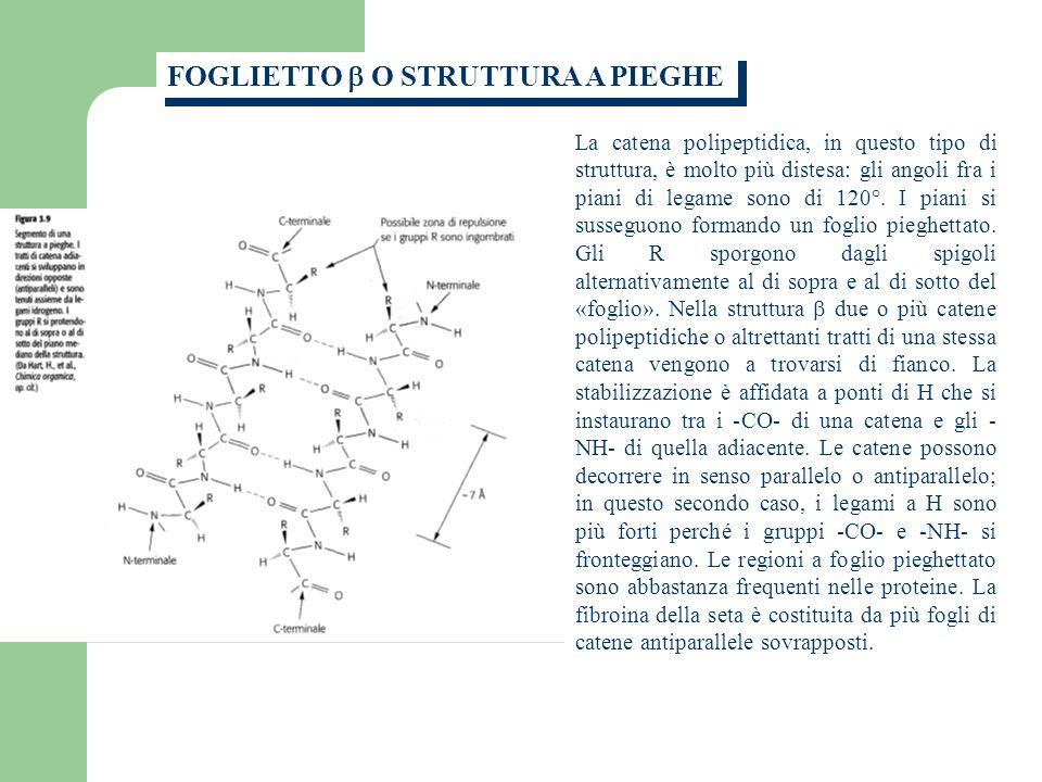 La catena polipeptidica, in questo tipo di struttura, è molto più distesa: gli angoli fra i piani di legame sono di 120°.