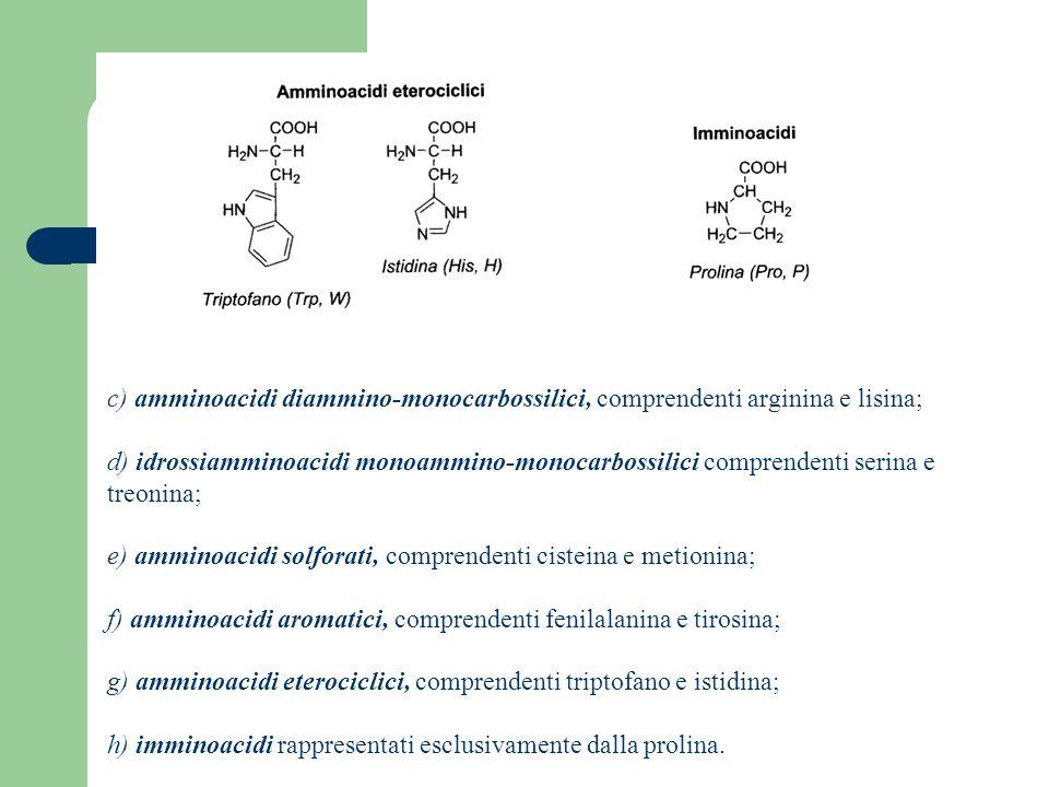 c) amminoacidi diammino-monocarbossilici, comprendenti arginina e lisina; d) idrossiamminoacidi monoammino-monocarbossilici comprendenti serina e treonina; e) amminoacidi solforati, comprendenti cisteina e metionina; f) amminoacidi aromatici, comprendenti fenilalanina e tirosina; g) amminoacidi eterociclici, comprendenti triptofano e istidina; h) imminoacidi rappresentati esclusivamente dalla prolina.
