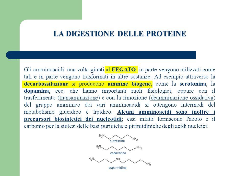 FEGATO decarbossilazioneammine biogeneserotonina dopamina Gli amminoacidi, una volta giunti al FEGATO, in parte vengono utilizzati come tali e in parte vengono trasformati in altre sostanze.
