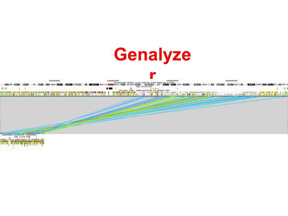Genalyze r
