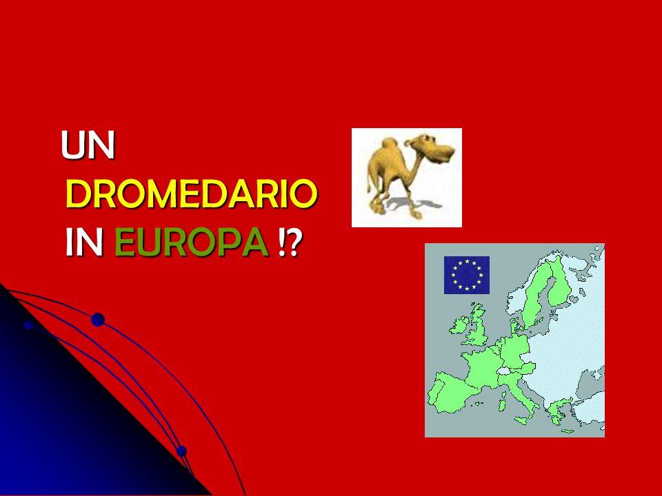 UN DROMEDARIO IN EUROPA !? UN DROMEDARIO IN EUROPA !?
