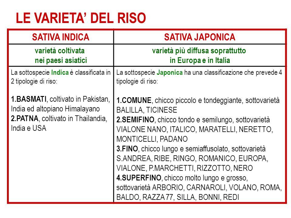 LE VARIETA' DEL RISO SATIVA INDICASATIVA JAPONICA varietà coltivata nei paesi asiatici varietà più diffusa soprattutto in Europa e in Italia La sottos