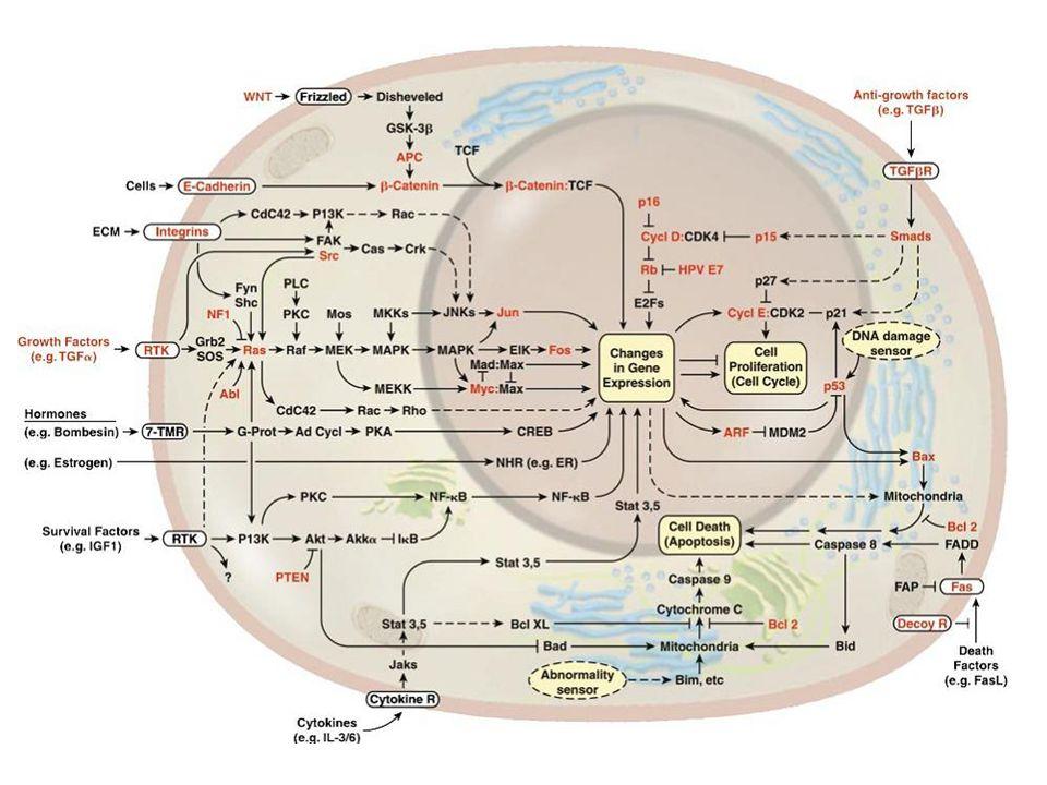 Trasduzione mediata da modificazione del potenziale di membrana I segnali elettrici sono utilizzati dalla cellula per condurre informazioni rapidamente e a lunga distanza che spesso sono tradotte in un luogo della cellula lontano dalla loro insorgenza.