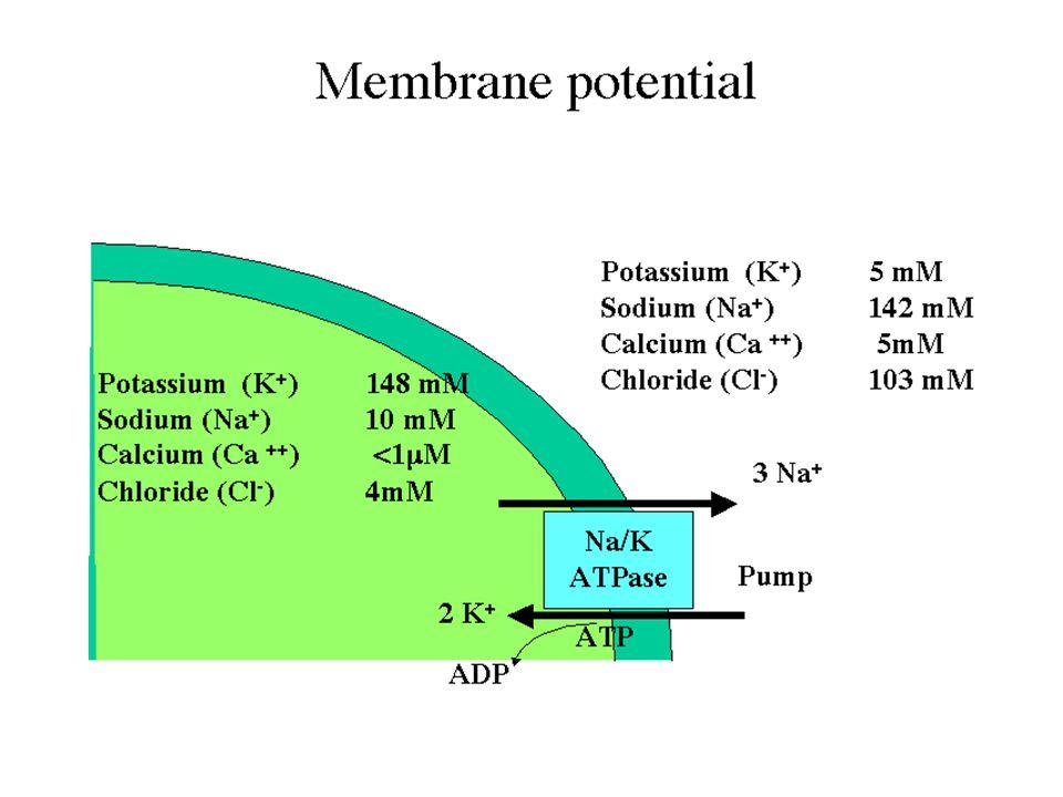Possiamo utilizzare l'Equazione di Nerst per calcolare il potenziale di Equilibrio dei vari ioni E Na = 61 log 10/145 = + 68 mV E Cl = 61 log 4/103 = - 85 mV E k = 61 log 148 / 4.5 = - 91 mV E K = RT/ZF ln (K + )e/(K + )i Ogni ione tende a stabilizzare il potenziale di membrana (Vm) a valori uguali al suo potenziale di equilibrio (E X )