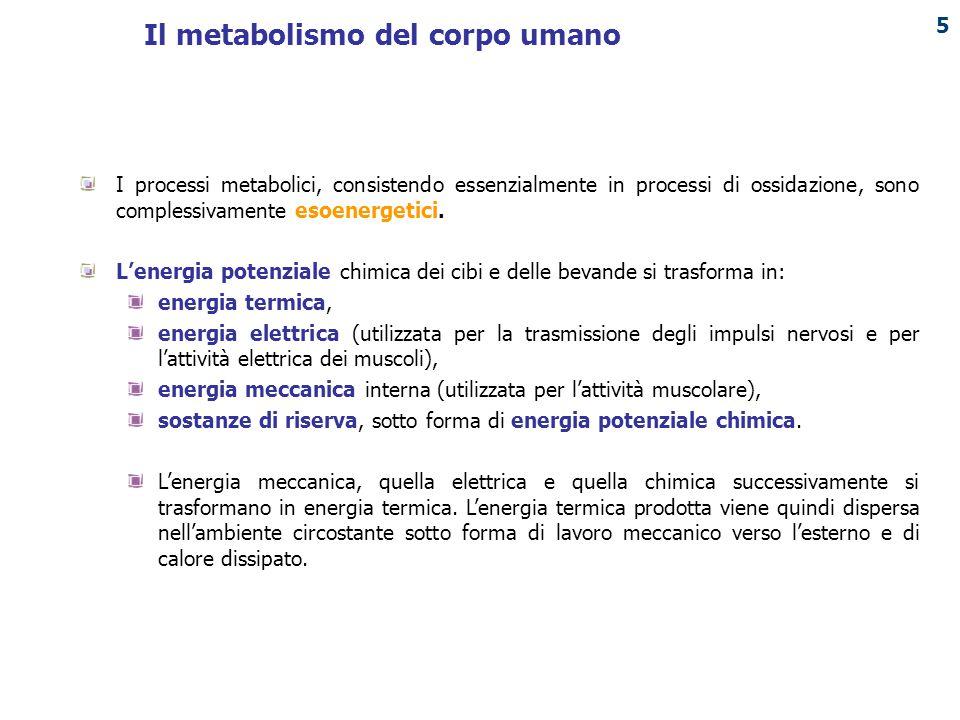 PUNTO ENERGIA 6 Il metabolismo del corpo umano
