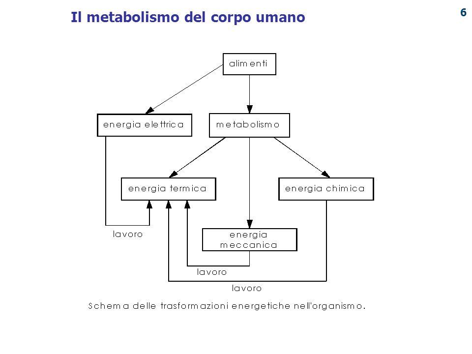 PUNTO ENERGIA Il metabolismo basale (legato esclusivamente al mantenimento dell'attività cellulare e al funzionamento degli organi principali) di ogni individuo dipende essenzialmente da: i cicli circadiani, il sesso, la massa e l'altezza, l'età.