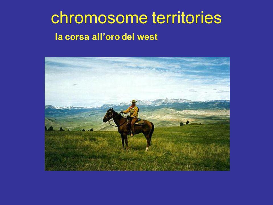 chromosome territories la corsa all'oro del west
