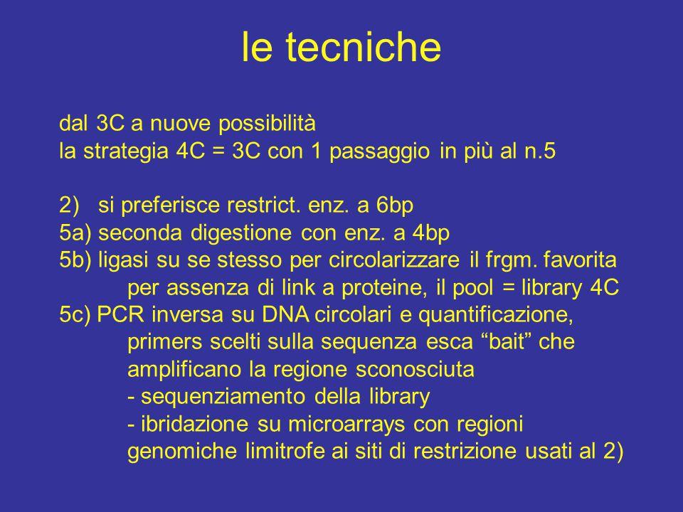 cerchiamo delle estremità ad un frammento di PCR intersperso all'interno di una sequenza ignota: - se ho trovato da Southern un frammento di DNA a sequenza ignota, - una inserzione di un frammento noto in un genoma, - un vettore che si è integrato in una regione ignota, - un virus integrato non sito specifico, - una ricerca gene trapping , - la ricerca delle estremità genomiche di un gene noto solo come cDNA