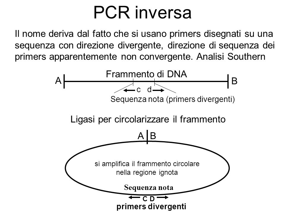 PCR inversa Il nome deriva dal fatto che si usano primers disegnati su una sequenza con direzione divergente, direzione di sequenza dei primers apparentemente non convergente.