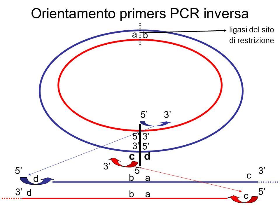 PCR nested per PCR inversa estremità ignote digerite su DNA genomico e legate regione nota I primers dovranno sempre essere complementari ai due diversi filamenti I coppia divergente II primer I amplicone II amplicone I primer II primer PCR nested quando si vuole ottenere maggiore specificità