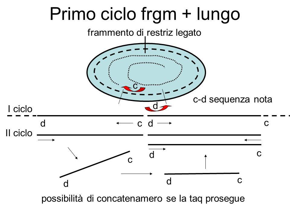 Primo ciclo frgm + lungo d d c c d frammento di restriz legato c-d sequenza nota I ciclo II ciclo d c d c d c c possibilità di concatenamero se la taq prosegue