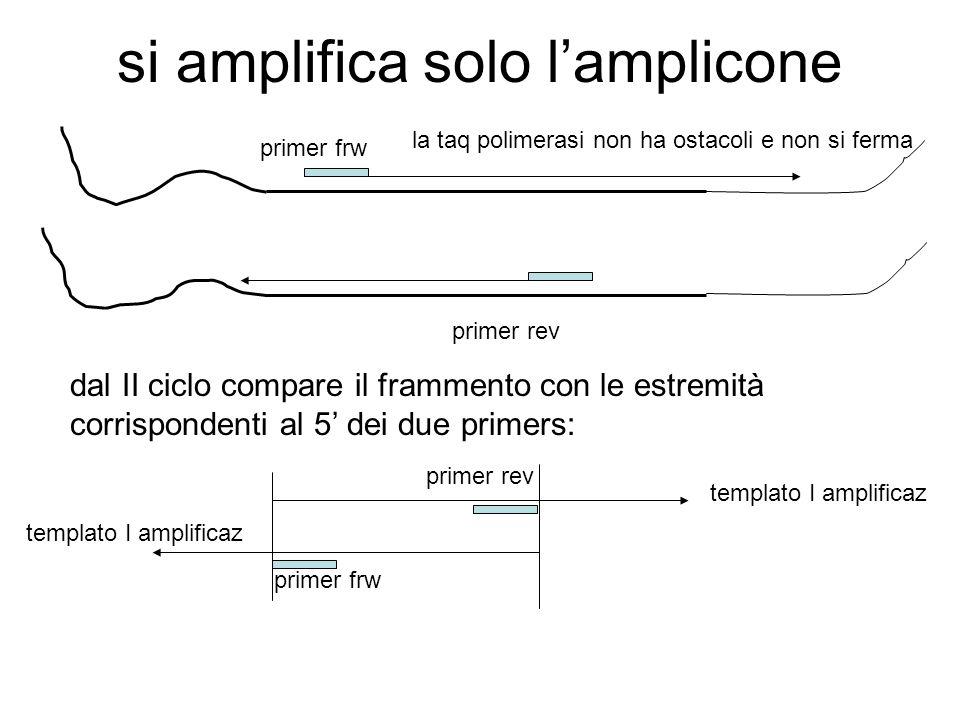 evoluzione del 3C 5C = Carbon-copy chromosome conformation capture 5) amplificazione con primers multipli dopo la ligasi con adattatori con seq.