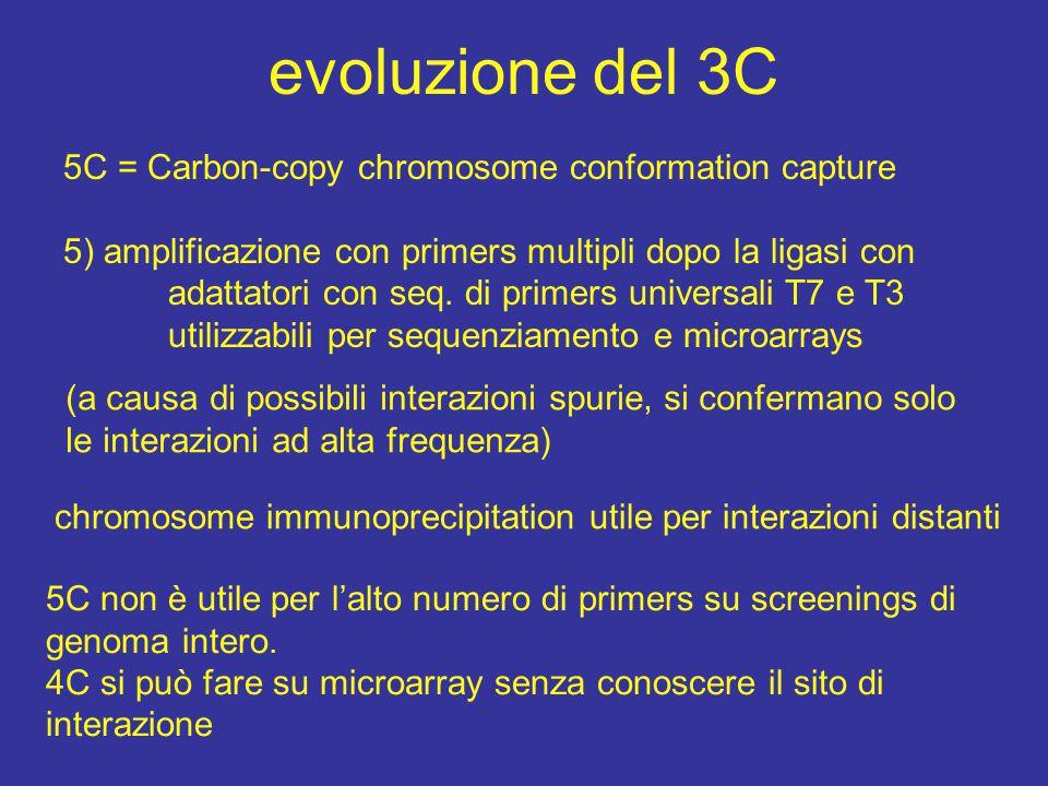 da chi è diretto il movimento della cromatina cercare di capire come si muove (attiva o passiva) analisi in vivo con microscopia i movimenti fuori dal territorio cromosomico controllati da actina-miosina in topi transgenici [ Curr Biol.