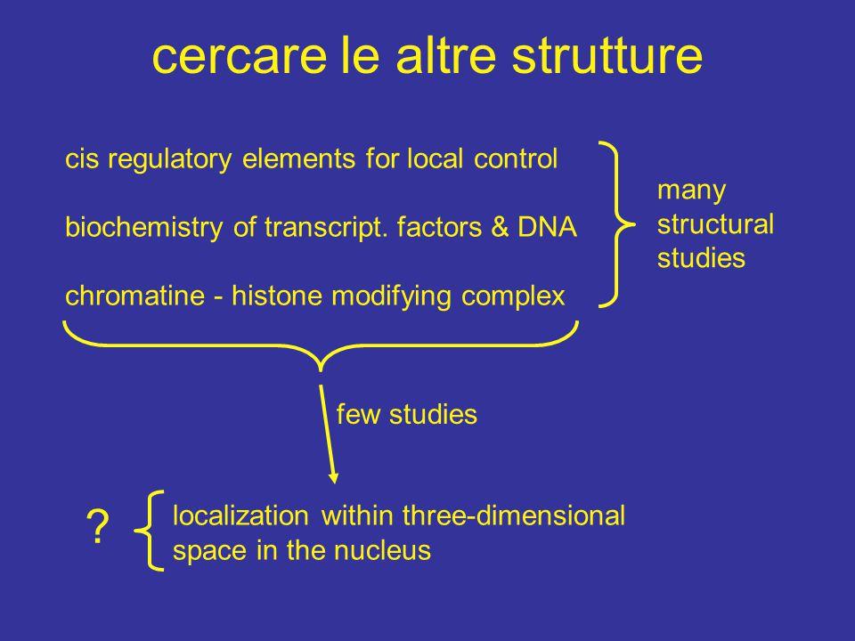cercare le altre strutture cis regulatory elements for local control biochemistry of transcript.