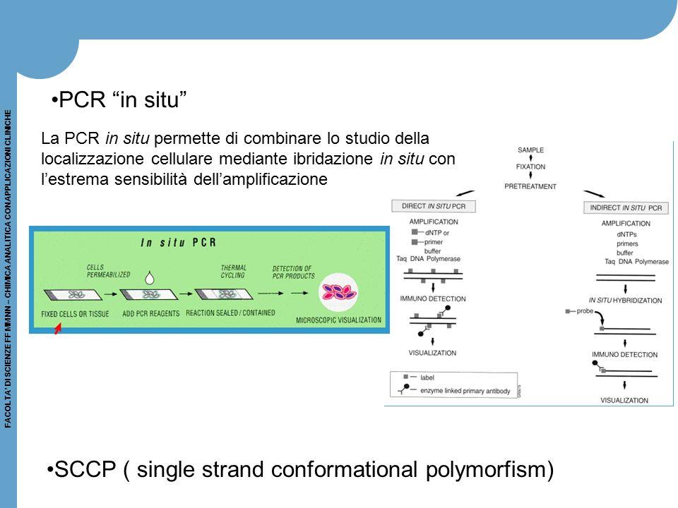 FACOLTA' DI SCIENZE FF MM NN – CHIMICA ANALITICA CON APPLICAZIONI CLINICHE La PCR in situ permette di combinare lo studio della localizzazione cellula