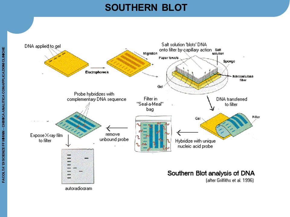 FACOLTA' DI SCIENZE FF MM NN – CHIMICA ANALITICA CON APPLICAZIONI CLINICHE PROTEIN MICROARRAYS Esistono due tipi principali di chip: antibody arrays Ab Microarray 500™ - BD Biosciences Clontech division, Palo Alto, CA > 500 anticorpi per quantificare proteine in lisati cellulari o altri campioni biologici TranSignal Human Cytokine Antibody Array 2.0 (Redwood City, CA) > 21 anticorpi per misurare citochine general protein arrays Yeast ProtoArray™ from Protometrix, Branford, CT, con circa 5.000 polipeptidi da Saccharomyces cervisiae per monitorare le interazioni proteina-proteina e proteina-piccole molecole (farmaci….) Yeast ProtoArray™